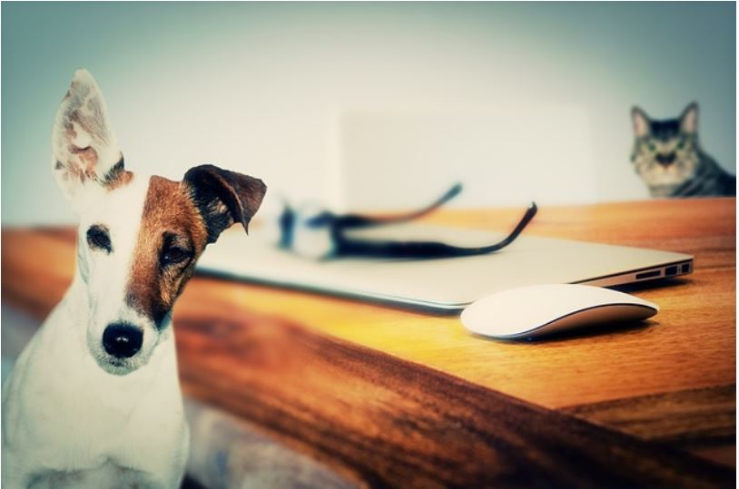 should you allow pets in rental property